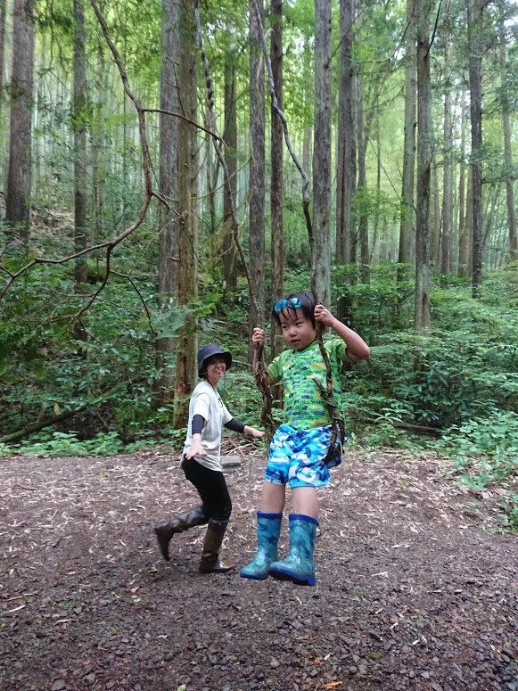 お散歩コースの森