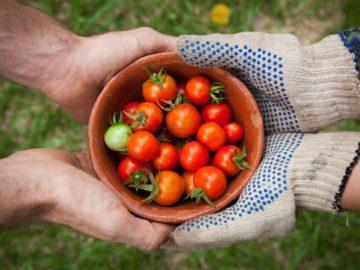 青梅で就農した若者たち「東京NEO・FARMERS青梅グループ」