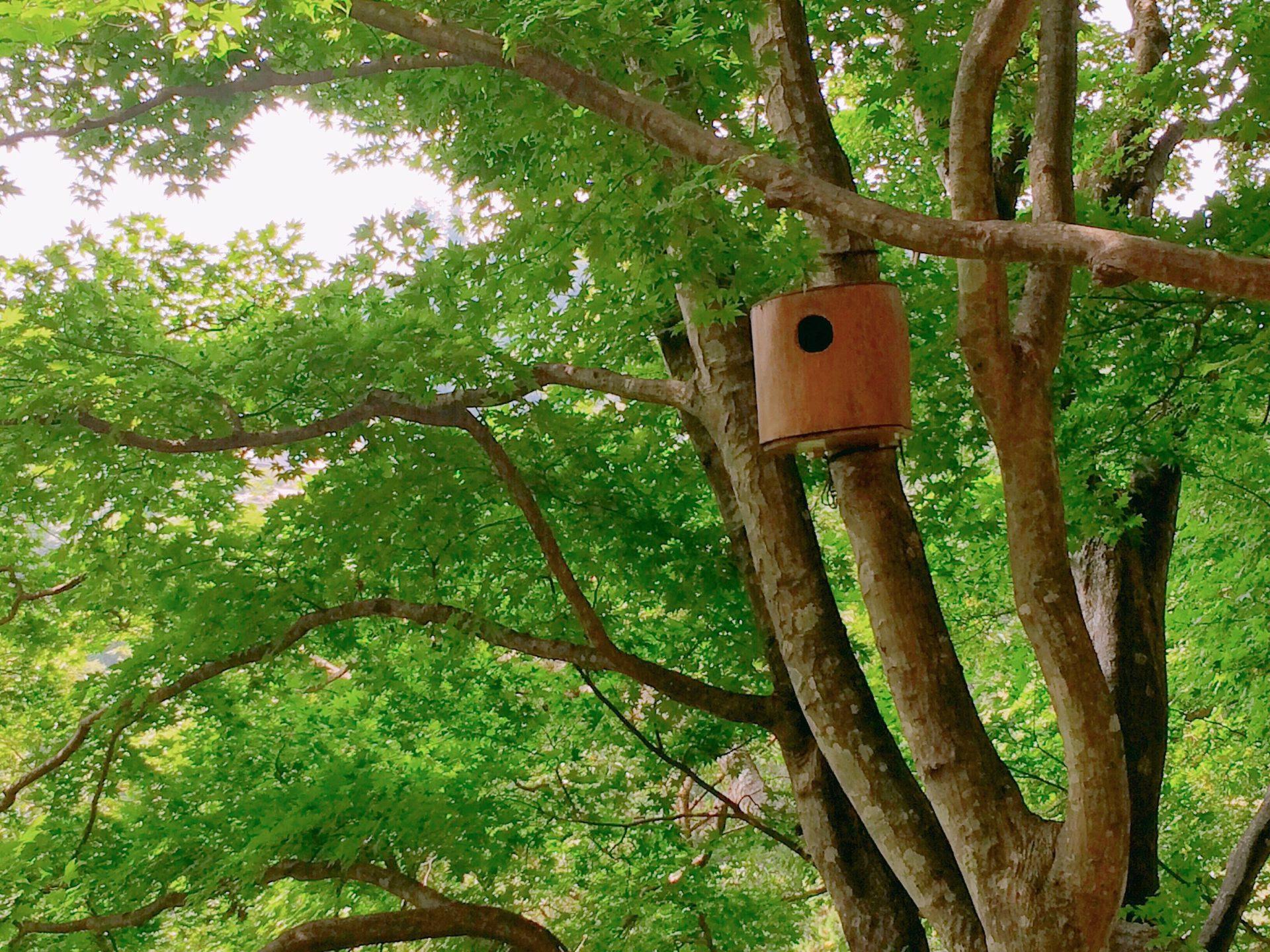 御岳の森 巣箱