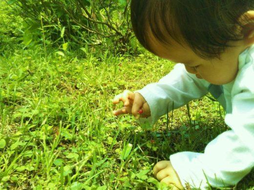 0歳から親子で自然体験「かぷかぷ山のようちえん」
