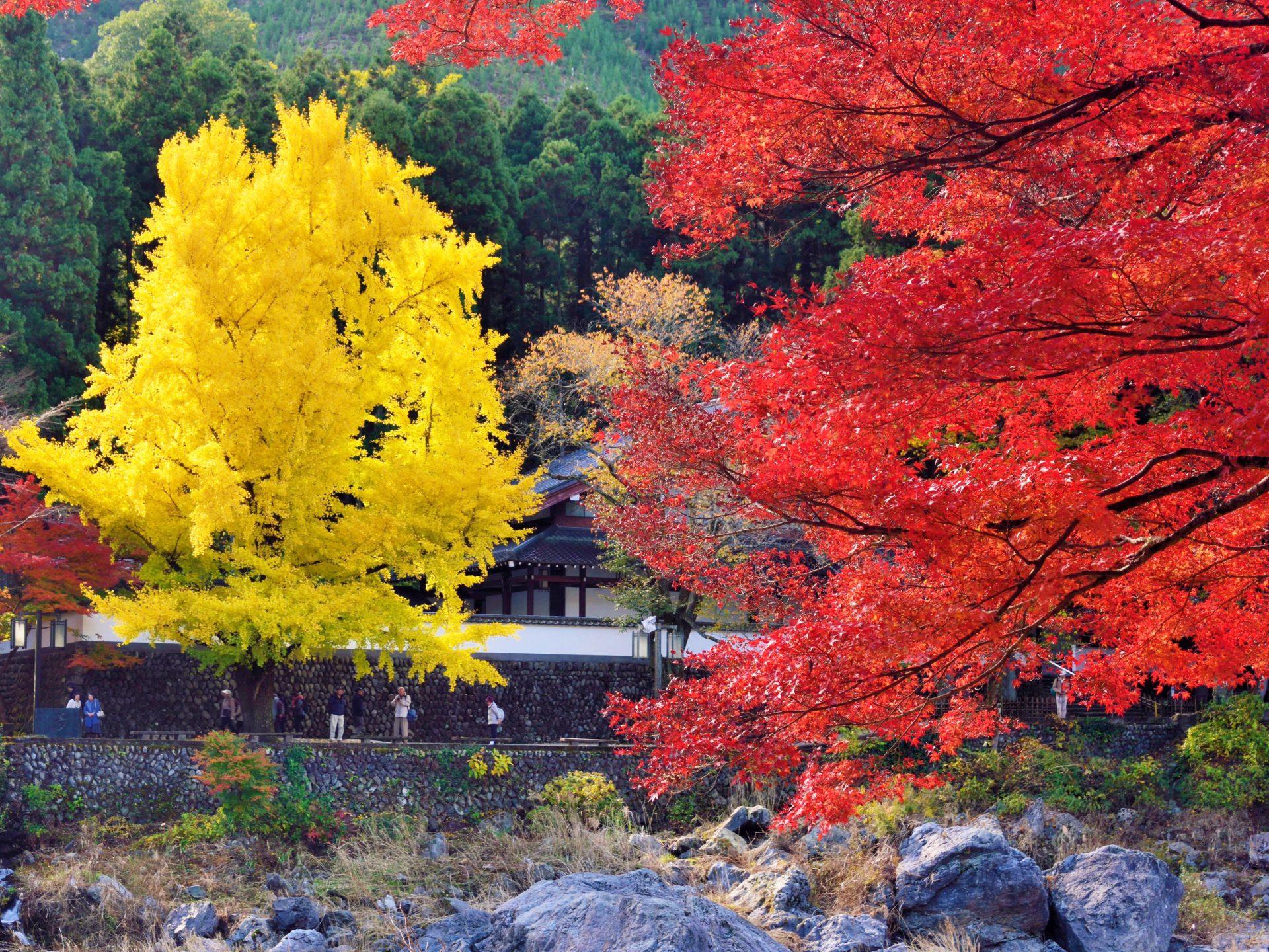 御岳の紅葉と大イチョウ