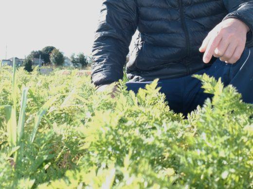 持続可能な未来の農業「ヤナガワファーム」