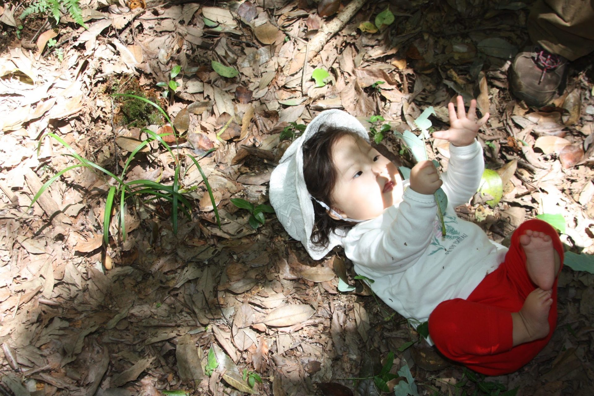 森の中の赤ちゃん