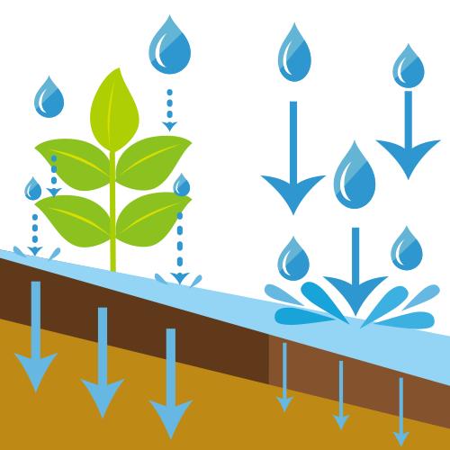 植物と土壌と雨の関係