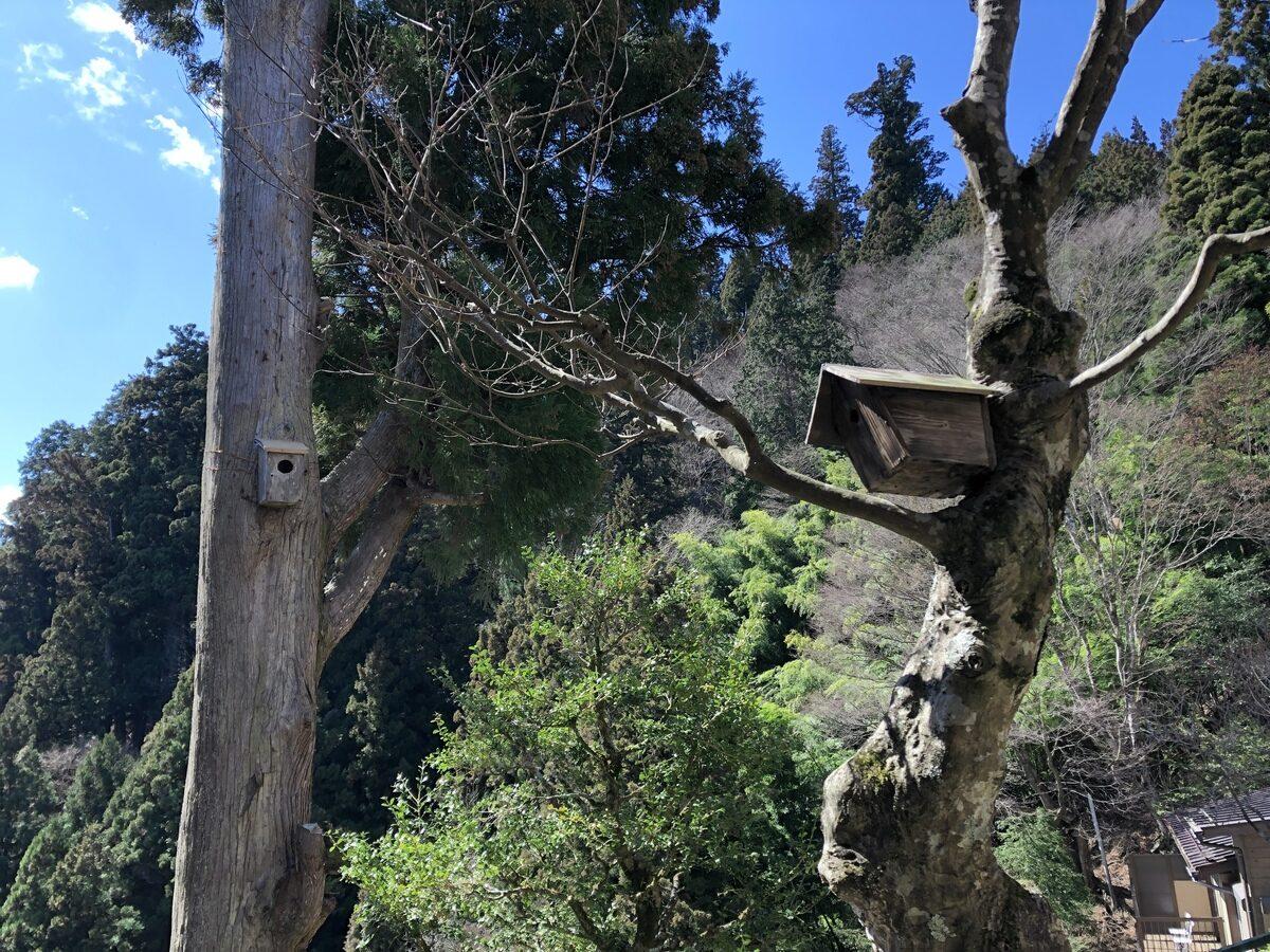 駒鳥山荘の巣箱